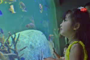 子供の体験学習・水族館