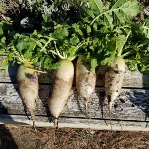 親子でできる習い事:家庭菜園・畑