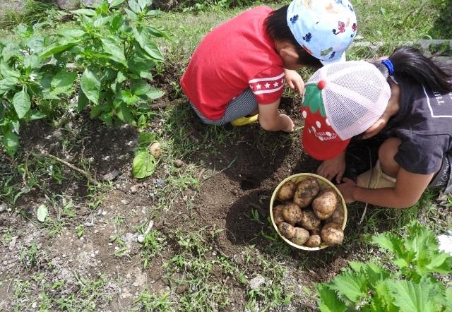 親子でおすすめの習い事家庭菜園
