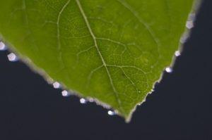 中学受験理科の葉の蒸発量