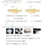 小5理科「動物の誕生」の学習プリント   無料ダウンロード・印刷