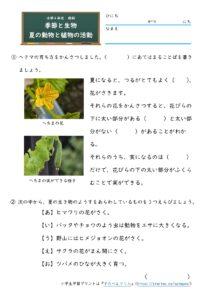 夏の動物と植物の活動(問題)