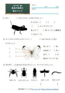 小3理科昆虫の成長と体のつくり