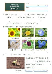 小3理科植物の成長と体のつくり