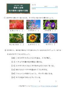 秋の動物と植物の活動(問題)