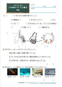 小6呼吸の学習プリント・練習問題