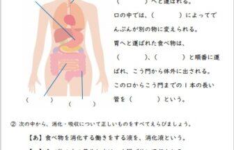 小6理科「人の体のつくりと働き」の学習プリント | 無料ダウンロード・印刷