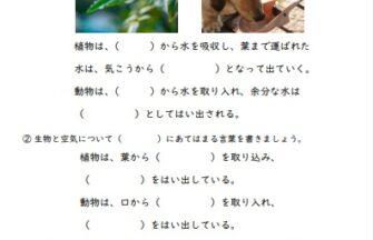 小6理科「生物と環境」の学習プリント | 無料ダウンロード・印刷